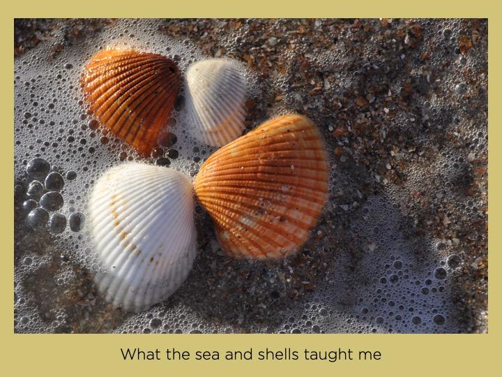 Lessen van de zee en de schelpen