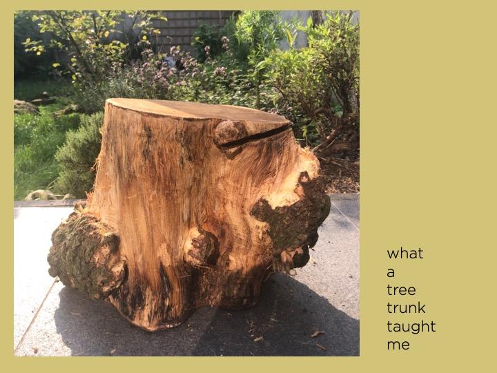 Lessen van een boomstam